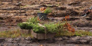 Wspólne sadzenie lasu