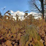 Jesienna galeria zdjęć